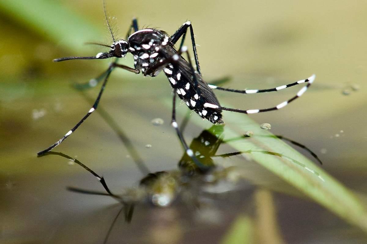 Mejores Antimosquitos para Piscinas
