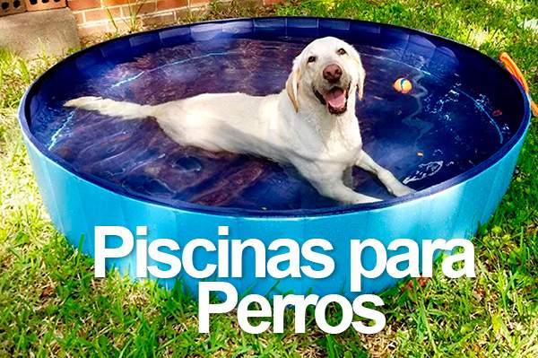 Piscinas para Perros Más Vendidas