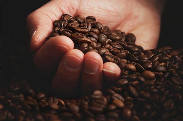 Mano que muestra granos del mejor Café del mundo